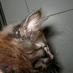 Baloo 10 Wochen alt