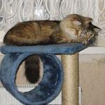 Cosmo 1 Jahr und 5 Monate alt mit Amelie 2 Jahre und 2 Monate alt