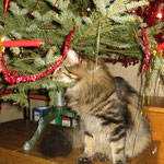 Cosmo 9 Monate alt