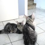 Metaxa und Maximus 5 Monate alt
