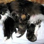 Dime 3 Jahre und 9 Monate alt mit ihren F-Babies 6 Tage alt