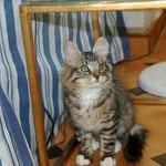Caruso 3 Monate alt