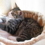 Camillo 14 Wochen alt