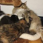 Frøya 4 Monate alt mit Amelie