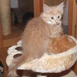 Elektra 9 wochen mit Fafnir 5 Wochen alt