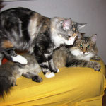Olympia 8 Monate alt mit Amelie