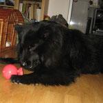 zu Hause quietscht sie gerne mit ihrem Ball