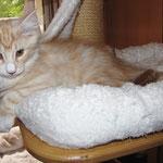 Yogi 12 Wochen alt