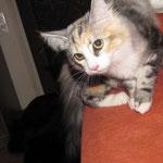Olympia 4 Monate alt und Eurasierhündin Lea