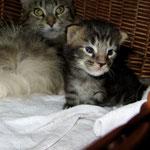 Ikarus 2 Wochen alt