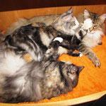 Olympia  1 Jahr und 1 Monat alt mit Froya und Amelie