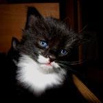 Sir Lanzelot 4 Wochen alt
