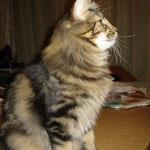Cosmo 1 Jahr und 7 Monate alt