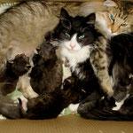 Dime 1 Jahr und 4 Monate alt mit ihren B-Babies 58  und dem A-Wurf 73 Tage alt