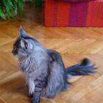 Gizmo 3,5 Jahre alt