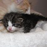 Violetta 2 Wochen alt