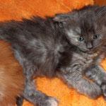 Galathea 4 Wochen alt