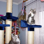 Figaro und Flint 3 Monate alt