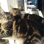 Igor und Ikarus 5 Monate alt