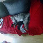 Mephisto 8 Monate alt