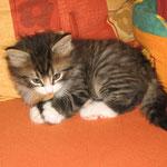 Camillo 8 Wochen alt