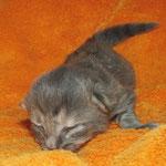 Andromeda 1 Woche alt