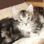Maximus  8 Wochen alt