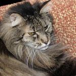 Cosmo 13 Jahre alt