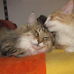 Amelie 10 Jahre und 1 Monate alt mit Tristan 37 Wochen alt
