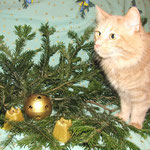 Pierroth 4 Jahre und 8 Monate alt zu Weihnachten