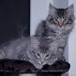 Julius und Juri 4 Monate alt