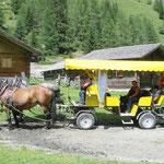 Eurasiertreffen in Osttirol bei einer Kutschenfahrt