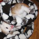 Wallace 6 Wochen alt