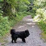 Spaziergang bei Göstling an der Ybbs