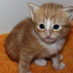 Fafnir 3 Wochen alt