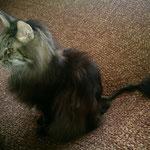 Cosmo 12 Jahre und 1 Monate alt nach Schwanz-OP