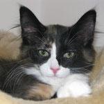 Lyra 4 Monate alt