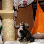 Yasmine 8 Wochen alt mit Yogi und Yeti