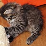 Borealis 8 Wochen alt