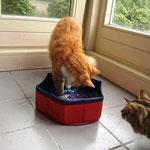 Tomcat 6,5 Monate alt