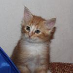 Fafnir 7 Wochen alt
