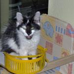 Calypso 3 Monate alt