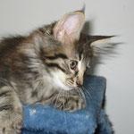 Barney 10 Wochen alt