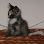 Frøya 3,5 Monate alt
