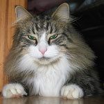 Camillo 1,5 Jahre alt