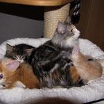 Olympia  1 Jahr und 11 Monate alt  Mit ihren Söhnen Tomcat, Troll und Tarzan 7 Wochen alt