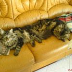 Igor und Ikarus8 Monate alt
