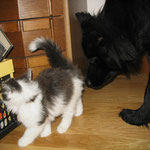 Neugierig auf Katzenbaby Cheyenne