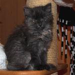 Galathea 9 Wochen alt
