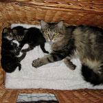 Daisy 4 Jahre  und 8 Monate alt mit Söhnchen Ikarus und Igor 22 Tage alt
